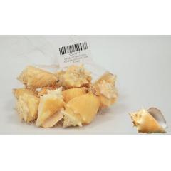 ΔΙΑΚΟΣΜΗΤΙΚΑ ΚΟΧΥΛΙΑ Νο15 QF18A021 0.5kg - ΚΩΔ:513015