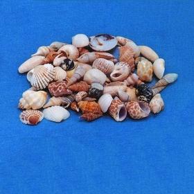 ΚΟΧΥΛΙΑ MIX 1-2cm - 1552 - ΚΩΔ: M1-WAV