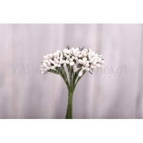 Σπορακι Ιριδα Λευκο - ΚΩΔ:3014102-10-Rd